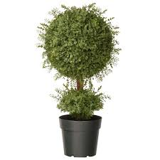 national tree company 30 in mini tea leaf 1 topiary in green