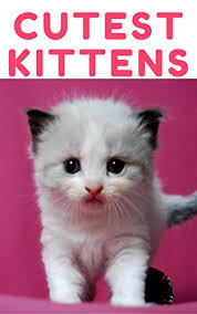 Cute Kittens Meme - very cutest kittens 1500 picture cutest kittens cats photobook
