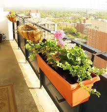 balkon blumenkasten beliebte herbstblumen für balkon 11 balkonbepflanzung ideen