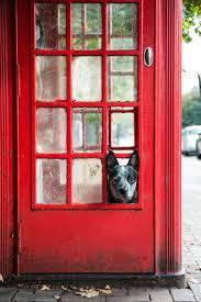 through the glass dog doors a dog u0027s life in london bored panda