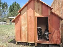 dog barn team small dog because barn dogs need a dog barn