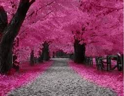 not sure where this would be but if there are pink trees there i
