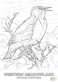 montana state bird coloring page free printable coloring pages