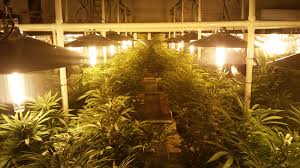 commercial indoor grow light and lightrail light movers