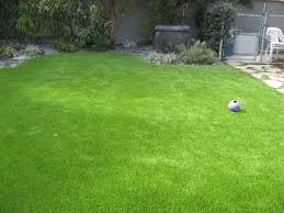 fresh australia grass for backyard 14334 in loversiq