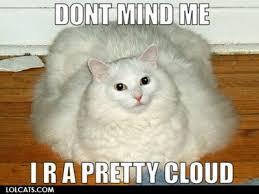 Lol Cat Meme - a brief history of memes and lolcats j99 social media strategies