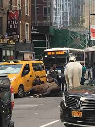scared horse falls into taxi cab on busy nyc street the dodo
