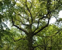 free photo nature leaves trunk majestic tree tree max pixel