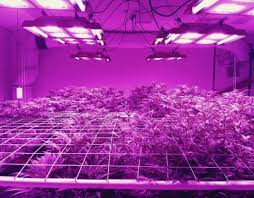 best led weed grow light uncategorized archives 420 light guide
