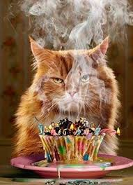 template free birthday ecards singing cats as well happy birthday sheri bday images happy birthday
