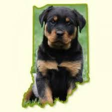 bluetick coonhound puppies indiana puppies for sale in in