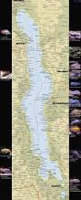 Lake Victoria Map Malawi And Victorian Cichlids