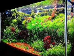 Aquascaping Techniques 141 Best Aquatic Plants And Aquascaping Images On Pinterest