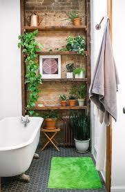 11 perfect plants for your condo bathroom