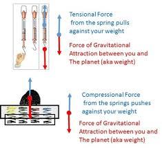 mass weight u0026 gravity vista heights 8th grade science