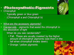 the absorption of light by photosynthetic pigments worksheet answers sunlight the energy source ppt video online download