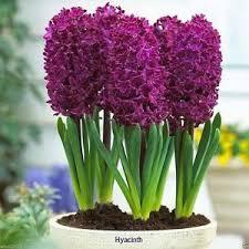 best 25 fall flower gardens ideas only on pinterest bulb
