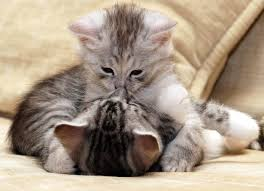 kitten wallpapers android apps on google play