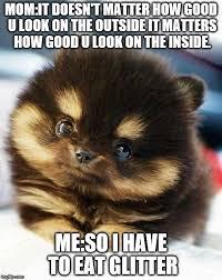 Pomeranian Meme - pomeranian memes imgflip