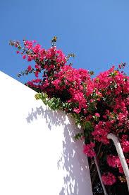 the 25 best puerto del carmen ideas on pinterest