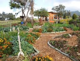 Backyard Permaculture Garden With Wooden Fences The Advantages - Backyard permaculture design
