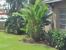 simple tropical landscape design part 2 year and a half after