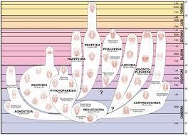 evolution and genetics ks3 and ks4 trilobites everything