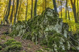 free photo tree forest rock free image on pixabay