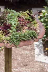 succulents meaning tips for planting succulents in a bird bath succulents and sunshine