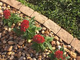 Bush Rock Garden Edging 10 Garden Edging Ideas With Bricks And Rocks Garden Club