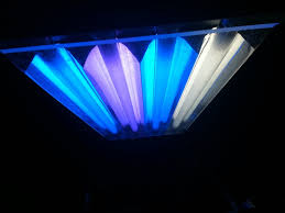 get the most out of your t5 bulbs reef central online community