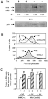activation of cyclin d1 cdk4 and cdk4 directed phosphorylation of