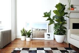 home interior plants modern living room plants interior design indoor plants large size