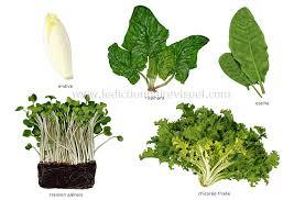 feuille de cuisine légumes feuilles feuilles de plantes potagères consommées comme
