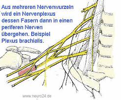 fußheberschwäche nerv lähmungen motorische störungen