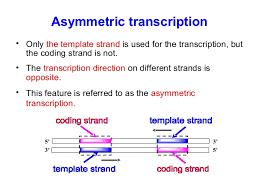 biochemistry transcription rna biosynsthesis