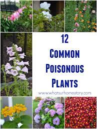 vegetable garden plants toxic to dogs u2013 garden ftempo