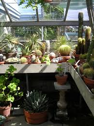 succulents for indoor winter growing hortus 2 there is life