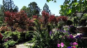 Tropical Plants For Garden - professional tropical flowers near columbia sc crabtree garden