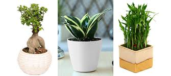 Small Plants For Office Desk by Articles With Baking Soda Cleanser Etude House Tag Baking Soda