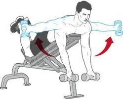 Incline Bench Muscle Group Best 25 Back Dumbbell Exercises Ideas On Pinterest Back