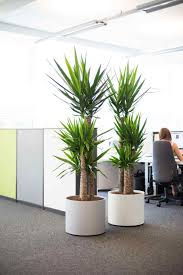 plant gallery atlanta alpha care plant plants for office cubicle