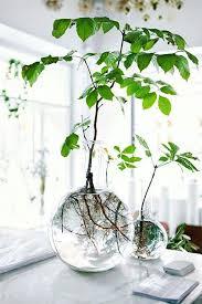 decorative indoor plants decorative indoor plant containers indoor plants pot ideas for