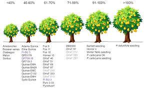 rootstocks wsu tree fruit washington state