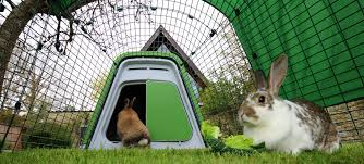 Rabbit Hutch For 4 Rabbits Eglu Go Rabbit Hutch Plastic House And Run For Rabbits