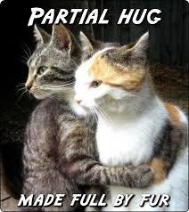 Cat Hug Meme - cats anonamos3021