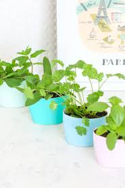 diy upcycled indoor herb garden lovely indeed