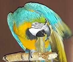 Parrot Meme - dismayed parrot meme generator imgflip