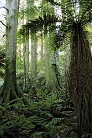 Tropical Dry Forest Animals And Plants - tropical forest britannica com