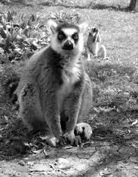 Tisch Family Zoological Gardens - photo0 jpg picture of tisch family zoological gardens biblical